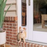 PetSafe Sliding Glass Pet Door