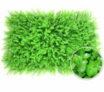 """jxgzyy 12 PCS Simulation Plant Wall Decoration Artificial Hedges Panels 15.7""""×23.6"""" Fresh Faux Foliage Fence Backdrop Living Room Home Green Grass Background"""